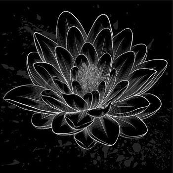 lotus drawing: Beautiful monochrome, black and white lotus flower