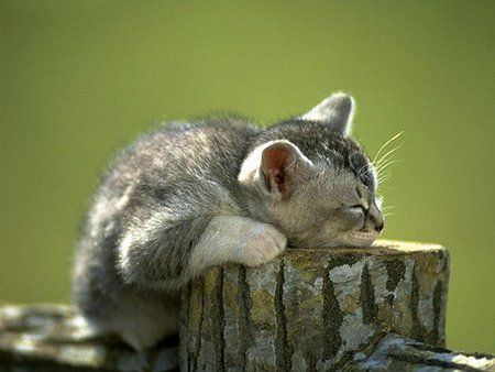 """""""Kittens are born with their eyes shut.  They open them after about 6 days, take a look around and close them again for the better part of their lives."""" --Stephen Baker"""