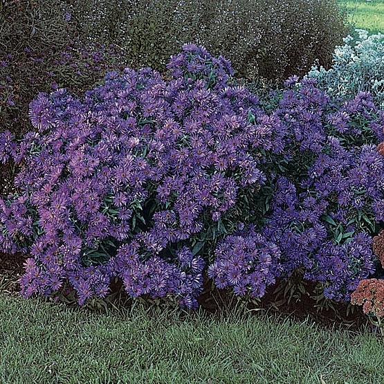 123 best images about perennials on pinterest
