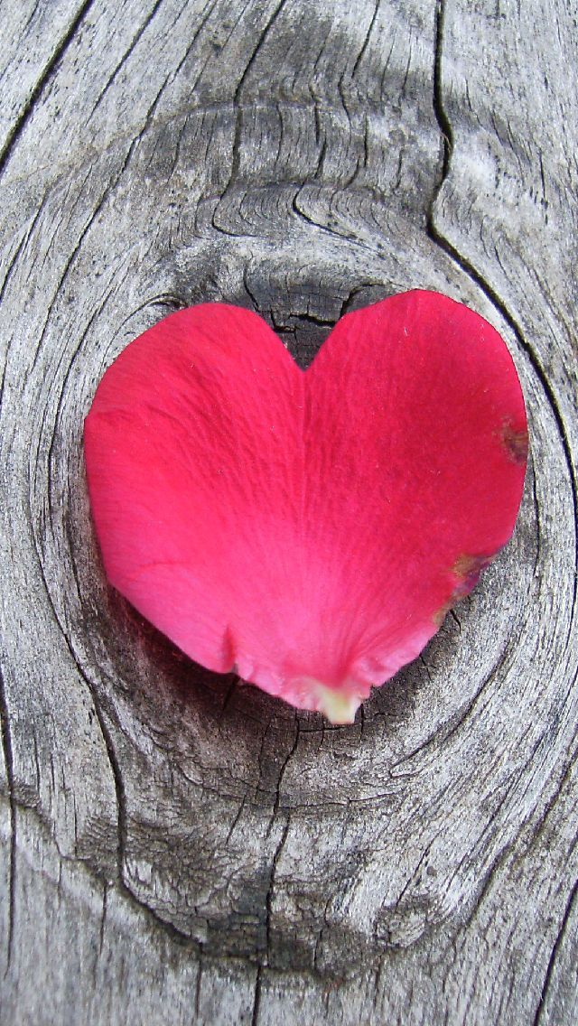 !!TAP AND GET THE FREE APP! Minimalistic Stylish Wooden Tree Flower Heart Pink Petal Rose Romantic Love HD iPhone 5 Wallpaper