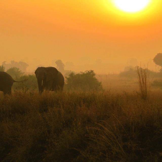 Elephant sunset in Uganda!
