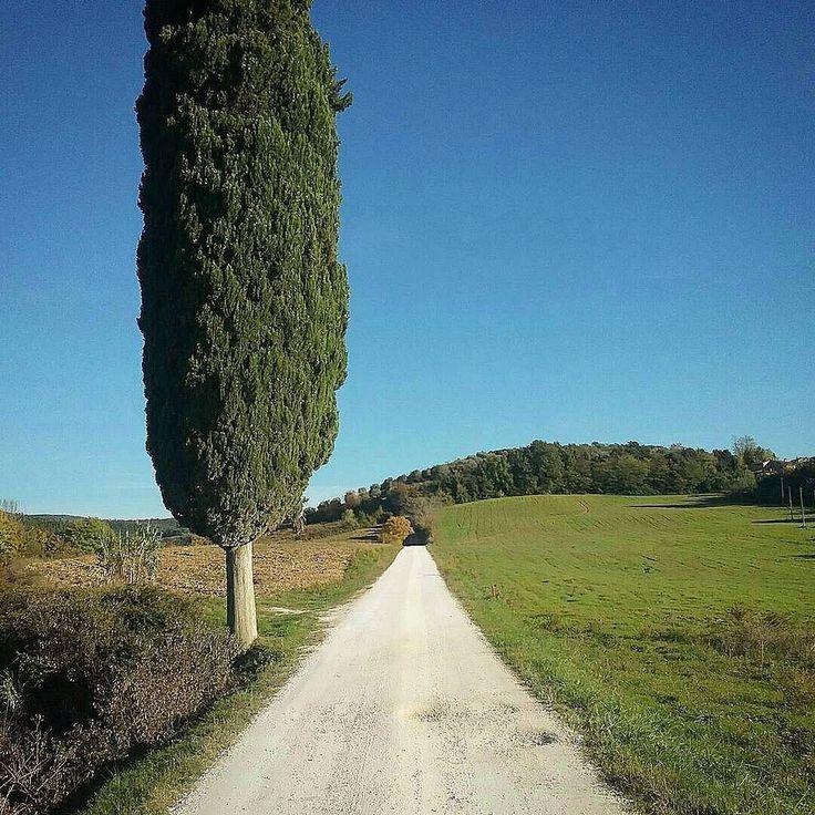 Chianti white road with Cypress #wonderful #chianti #life We  Tuscany #chiantilovers #ilovetuscany #instamood #instadaily #italy #art #discovertuscany #love #sun #tuscany #cypress #instatravel #instavacation #aroundtheworld #chiantilife #chianticlassico