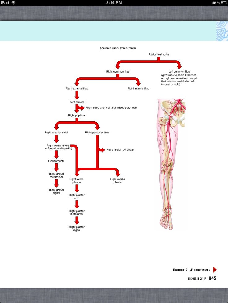 Bonito Anatomy And Physiology Chapter 15 Cardiovascular System ...