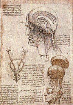 Cerveau, nerfs crâniens, appareil génito urinaire_plume encre brune Weimar, Schlossmuseum