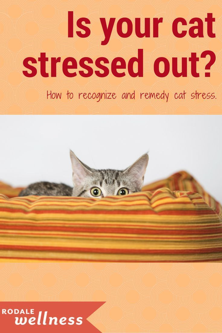 How to Tell if Your Cat Is Depressed Cats can suffer from depression just like people This can be caused by a variety of factors from moving to a new