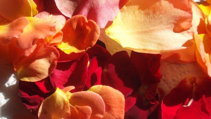"""Petit rituel de beauté 100 % naturel Zoom sur 3 incontournables, version """"maison"""" Quel plaisir d'utiliser pour nos soins quotidiens des produits 100 % naturels et uniquement à base de plantes fraîches ! Lorsque l'on peut en plus les préparer soi-même,..."""