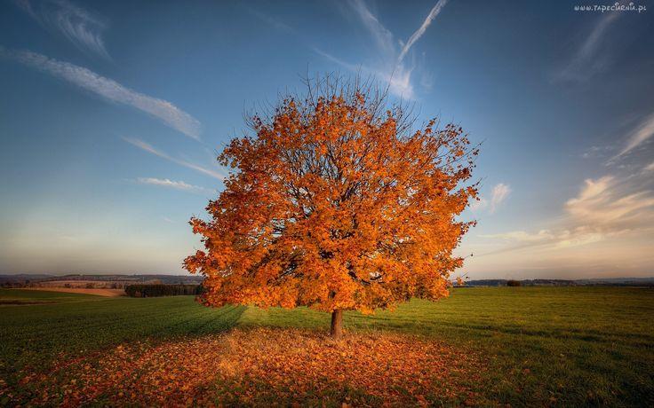 Jesień, Pole, Drzewo, Trawa, Niebo