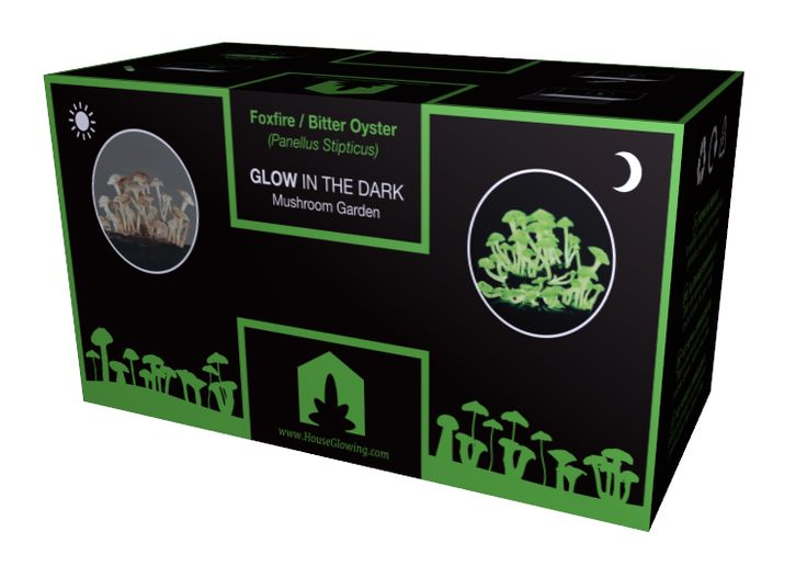 Black Glow Box: safe and fun! Glow-In-the-Dark mushroom kit. by HouseGrowing
