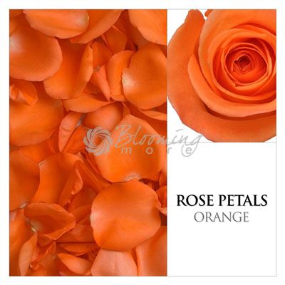 the 109 best rose and rose petals wedding ideas images on pinterest