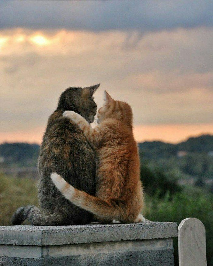 Картинки обнимаю котика