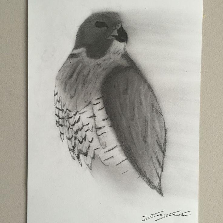 Hawk blowing away