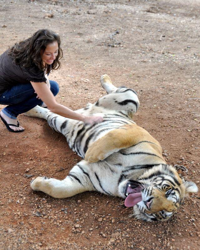 Tiger Temple Bangkok, Thailand