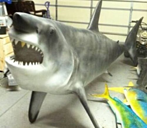 """Meanwhile in Queen Creek - www.KeepScottsdalePlastic.com ~ Seeing as how there is no category for """"massive nightmare shark decor,"""" might as well throw it under """"general for sale"""" on craigslist. Leave the decision making to whether it looks better in the foyer or master suite overlooking the veranda by the glow of the bedside candelabra, brah."""