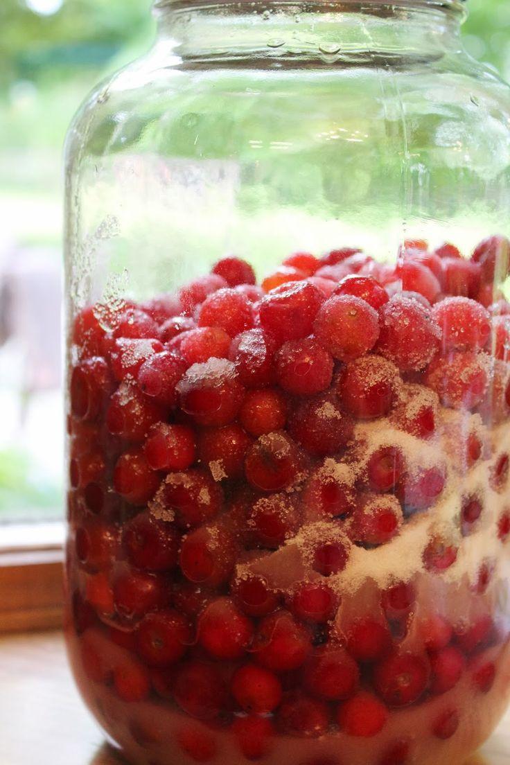 Homemade Cherry Brandy Romanian Visinata Sipping Brandy Cherry Bounce Cherry Brandy Liquor Recipes Cherry Drink