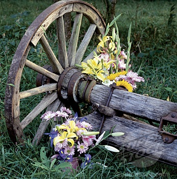 Close Up Of Flowers With A Wagon Wheel In A Garden (1516 131