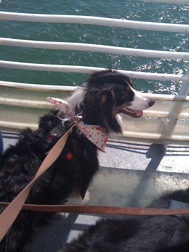 Teagan on the ferry to Pelee Island!  Enjoying the Lake Erie breezes from the deck of the ferry! Just one of my 2 pooches....the other is camera shy ...for now.