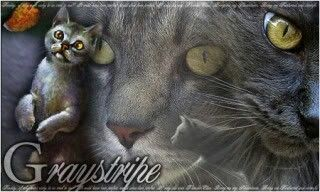 Graystripe... My semi fave Cat. Grief and love made me hate him for a bit. No spoilers beyond book 4 please!