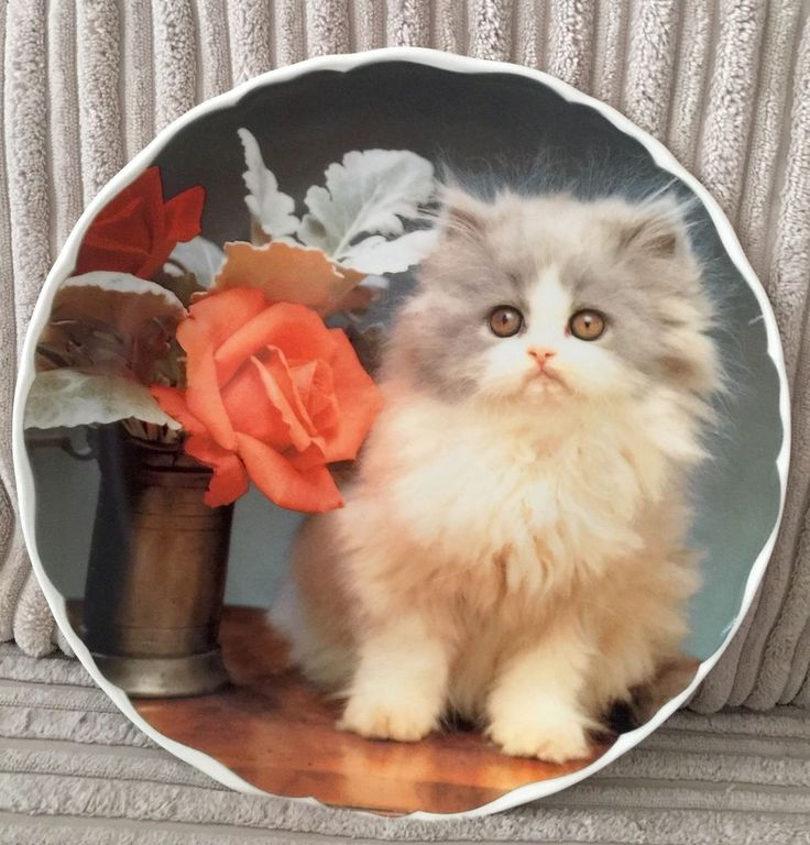 Vintage Retro Collectable Royal Albert Fine Bone China Cat Kitten Plate - Misty