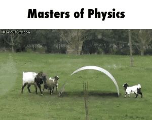 Gravity does not apply to goats GIF