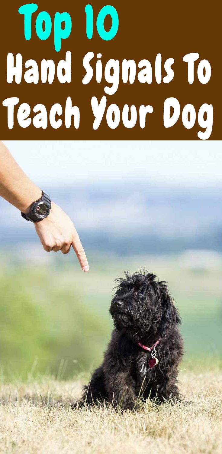How To Teach Your Dog With Hand Signals Dog Behavior Training