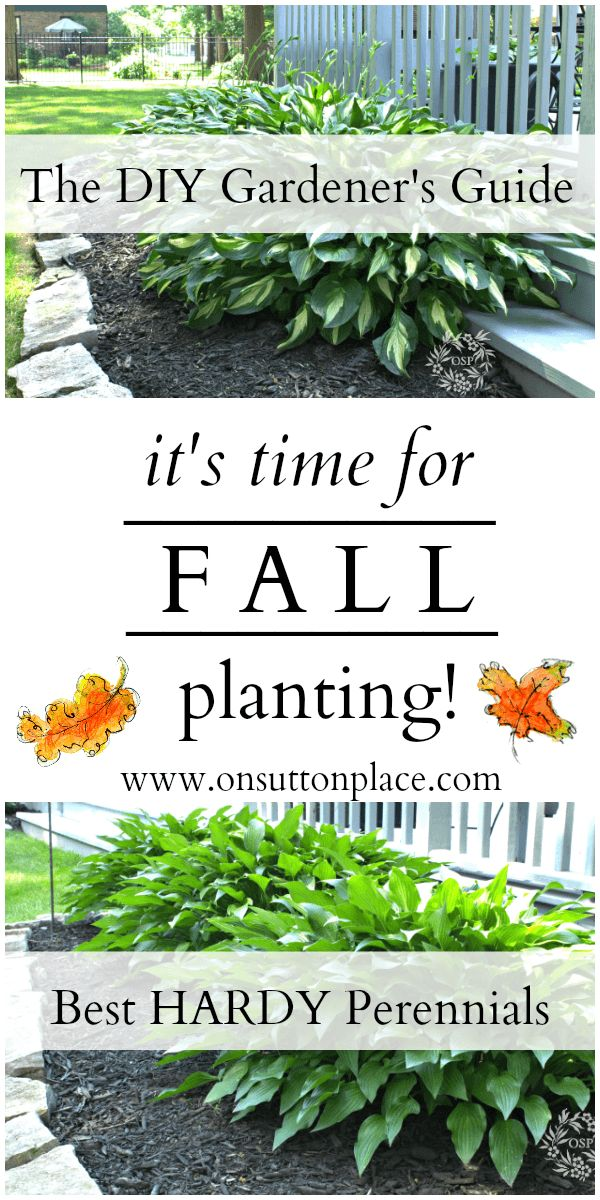 1000 Ideas About Fall Planting Guide On Pinterest Growing Sweet Potatoes Planting A Garden