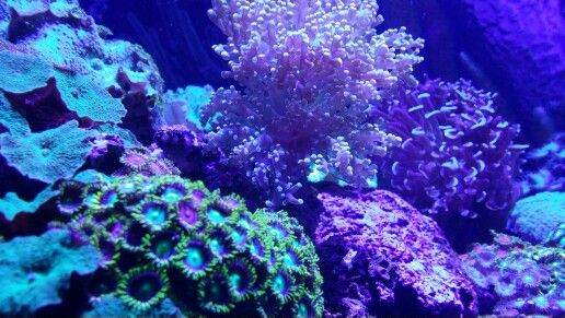 Cosmic coral