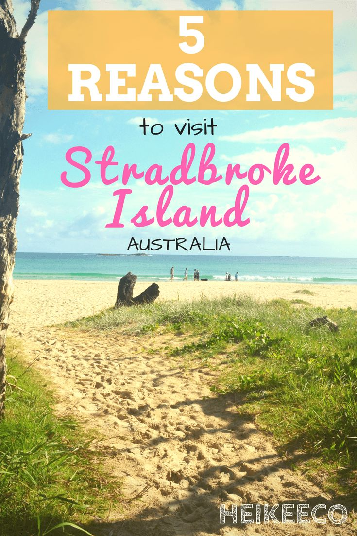 I've literally just had THE BEST TIME on the Stradbroke Island, a subtropical getaway in Australia. Read why here: heikeeco.com/travel-stradbroke-island-australia/   #travel, #nature, #green, #island, #holiday, #camping, #outdoors, #forest, #beach, #koalas, #australia, #stradebroke