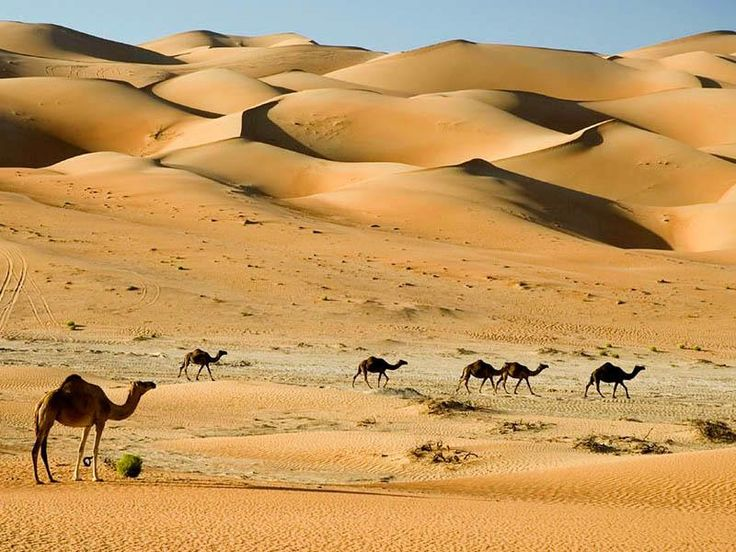 Camel Safari at Nushki Desert. Pakistan    Nushki, is a town in Balochistan, Pakistan. The town lies southwest of Quetta, and is situated in a plain at the base of the Quetta plateau, 2900 ft above sea level. From Nushki, the flat Balochistan desert stretches away northward and westward to the Helmand River.    Picture Credit: Unknown.