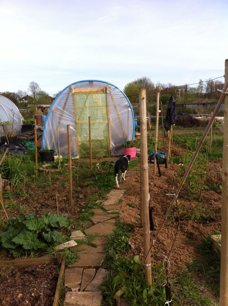 Polytunnel and path