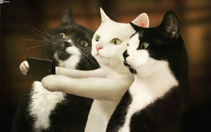 Cat selfie😸 https://www.youtube.com/c/WeMeow #cat #cats #wemeow #meow #catlife #cutecat #catlove #lovecats #gatos #gatti #koty #katze #chats #kitty #kitten #kittens #lovecat #funnycat #cateye #beautifulcat #nicecat #amazingcat #catlooking #catofinstagram #catsoftumblr #catstagram #instapets #instacat #pet #pets #selfie #catselfie