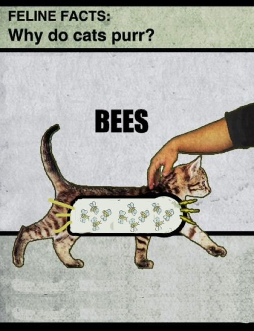 Why do cats purr?  BEES, of course.