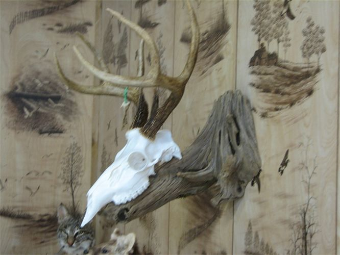 Fur and Feather Taxidermy, LLC - Skull & Panel Mounts. I like the idea of drift wood for attaching a European mount to the wall.