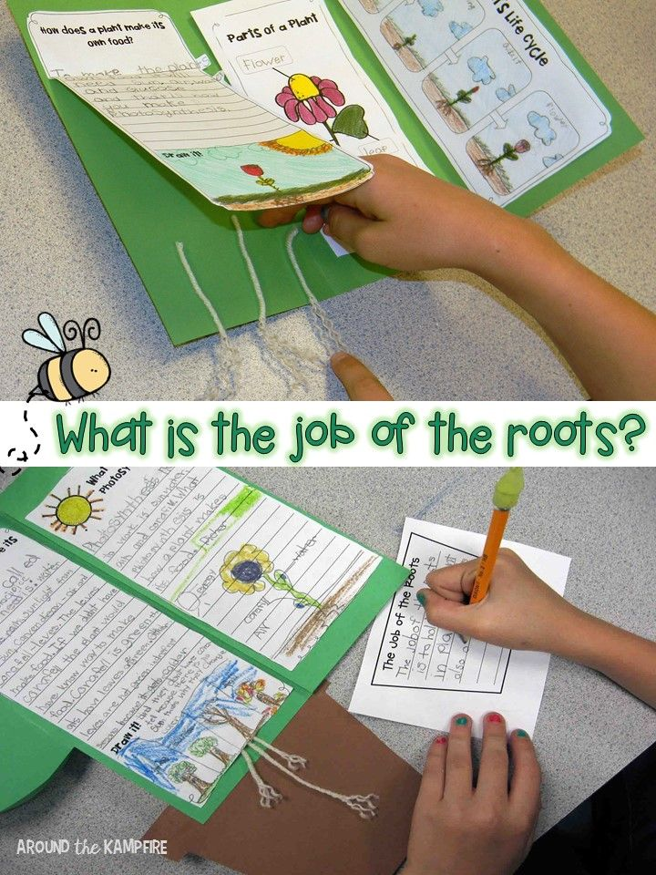 Plant life cycle activities- Writing about the job of roots. Part of a complete science unit for teaching about plants.
