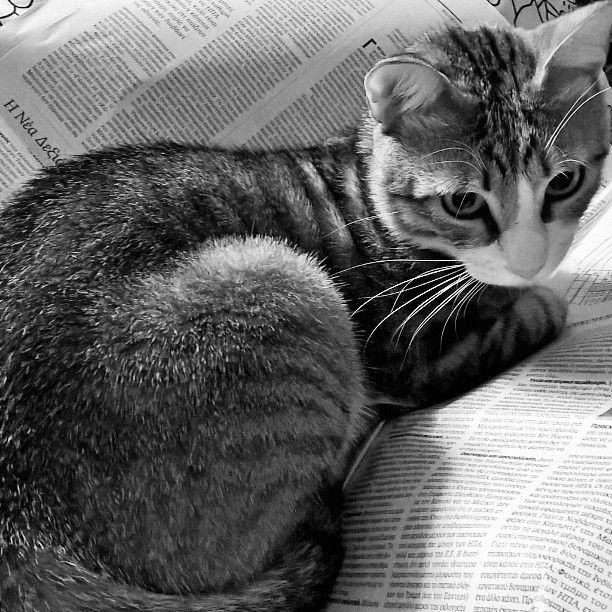 Whoever said that #cats love reading? Whatever form I choose he wants me to stop and play with him  #pets #reading