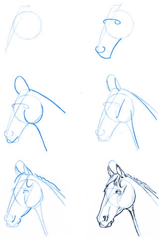 Dibujo_estructura-cabeza_caballo-02