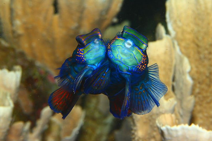 photos-creatures-marines-indonesie-lembeh-strait-alexis-golding-6