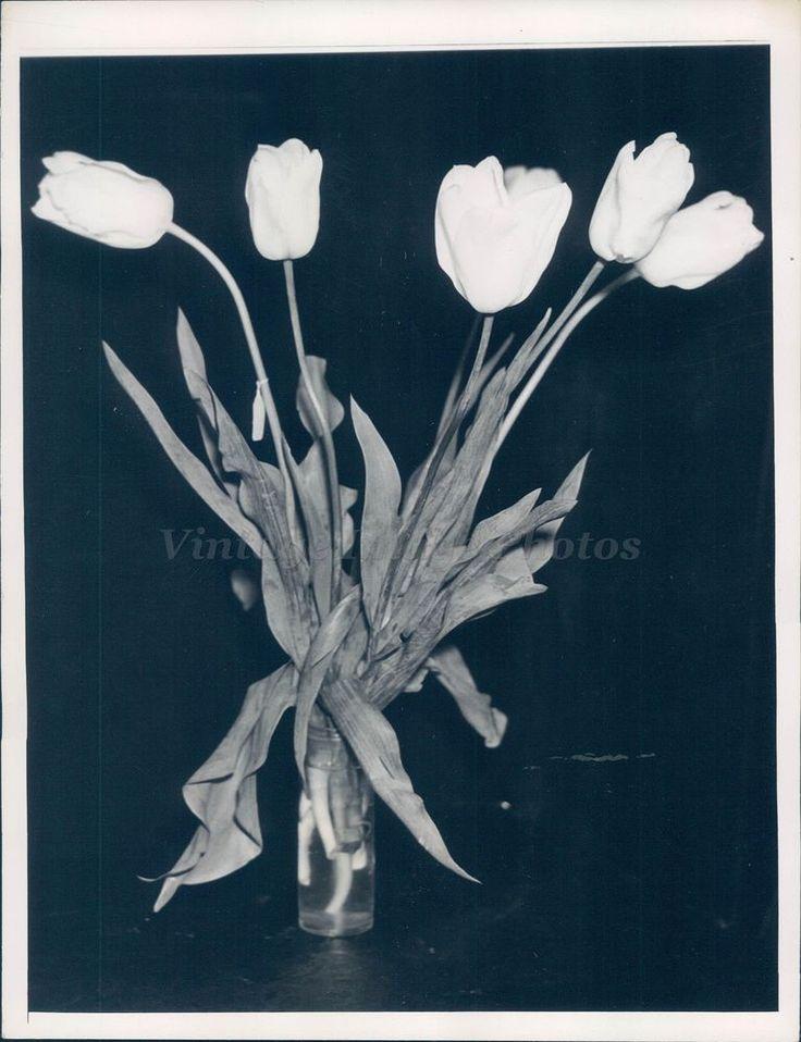 1936 Photo Tulips Prize Winning Darwin JP Morgan Floral Annual Show Original