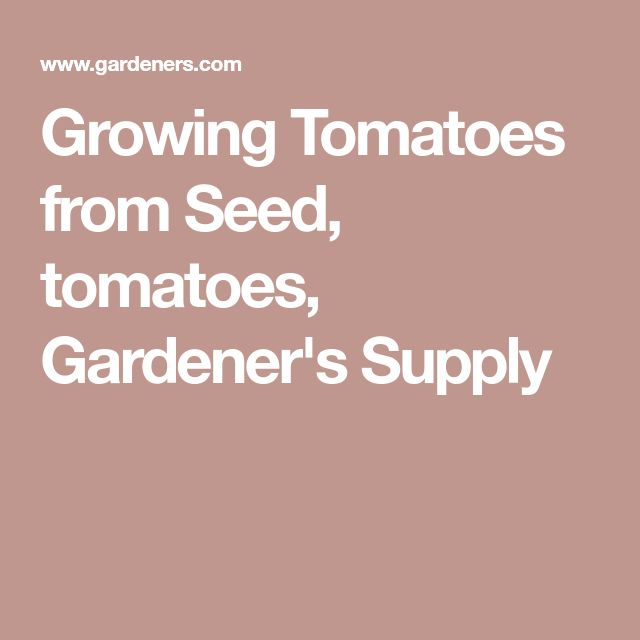 Growing Tomatoes from Seed, tomatoes, Gardener's Supply