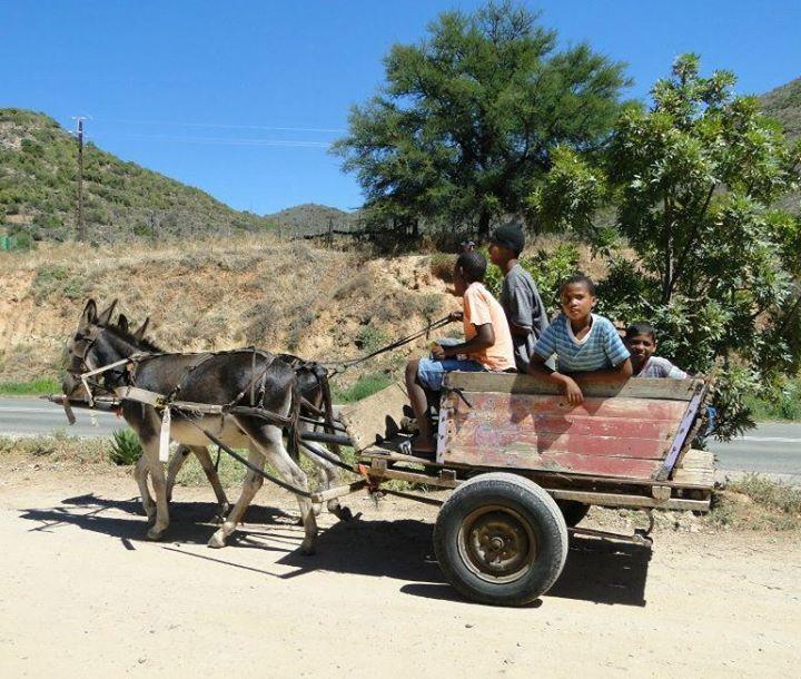 Oudtshoorn Tourism -- this is how the locals get around