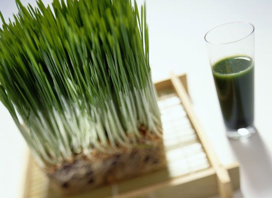 The 11 Best Smoothie Ingredients: Wheatgrass http://www.rodalenews.com/smoothie-ingredients