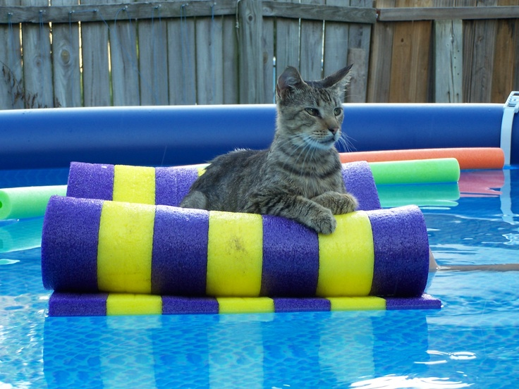 Cat In Swimming Pool : Best images about crazy swimming pool kits on pinterest