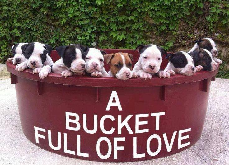 A bucket full of love