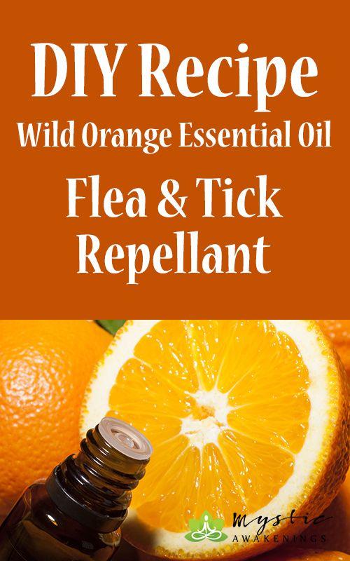Diy Wild Orange Essential Oil Flea Amp Tick Repellant