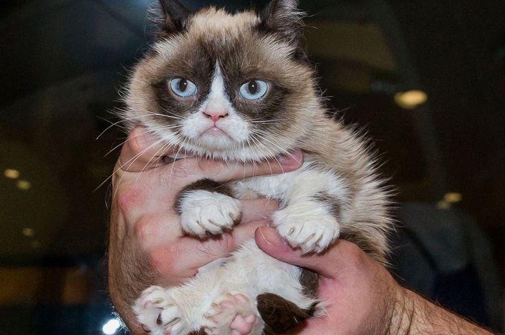 77 best images about grumpy cat on pinterest