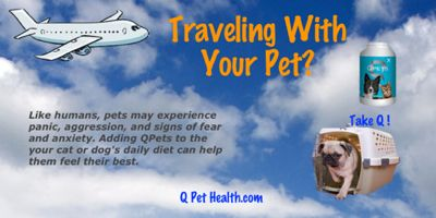 Have an #anxious pet traveller? Use #Qpets to help calm their anxiety and fears and give them the natural supplement for optimal health. http://qpethealth.com