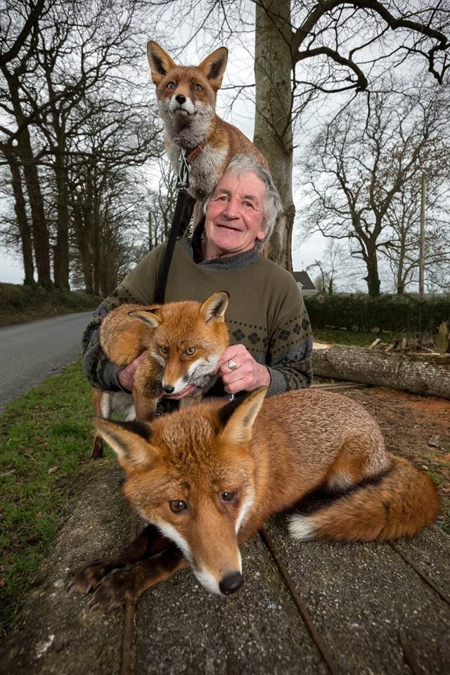Patsy Gibbons and his rescued Foxes photo by Dylan Vaughan
