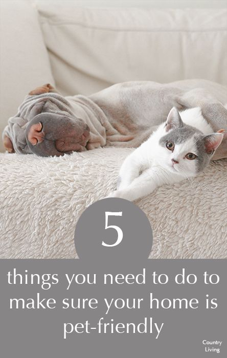 5 things you need to do to ensure your home is dog-friendly