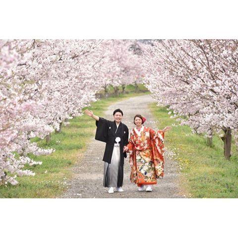 【kikiphotoworks】さんのInstagramをピンしています。 《和装前撮り桜 ・・・ まだ初夏の梅雨時ですが、すでに来年の桜の時期の問い合わせが来ています。 なのでしばらくは今年の春に撮った写真を、もうちょっと紹介しようと思います。  この写真は、特に有名でもなんでもない、近所の川の堤防です。 桜の名所ではないので観光客は当然誰もいません。桜で撮るにはそんな無名な場所がベストです。 ・・・  #プレ花嫁 #結婚準備 #花嫁 #花嫁準備 #結婚 #和装 #結婚式 #結婚写真 #桜 #さくら #綺麗 #可愛い #ヘアスタイル #髪型 #婚約 #前撮り #記念写真 #ウエディング #ig_wedding #IGersJP #instawedding #instagramjapan #weddingphotography》