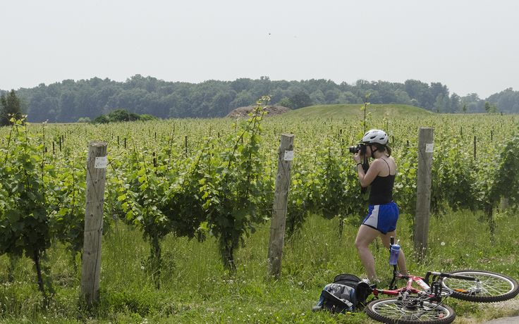 You can also take a self-guided Wine Trail Ride cycling tour every Saturday! The Wine Trail Ride cycling tours in Windsor-Essex, Ontario are winners of provincial and national tourism awards. Visit www.winetrailride.ca for more info.