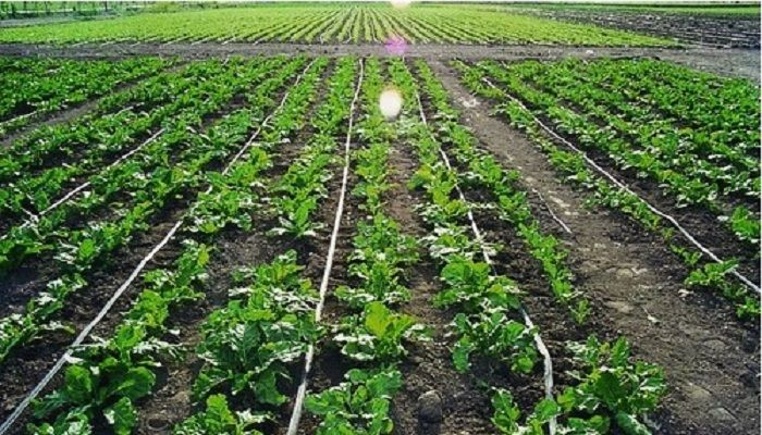 Global Micro Irrigation Systems Sales Market 2017 - The Toro Company, Valmont Industries, Lindsay Corporation, Rivulis Irrigation, T-L Irrigation - https://techannouncer.com/global-micro-irrigation-systems-sales-market-2017-the-toro-company-valmont-industries-lindsay-corporation-rivulis-irrigation-t-l-irrigation-2/